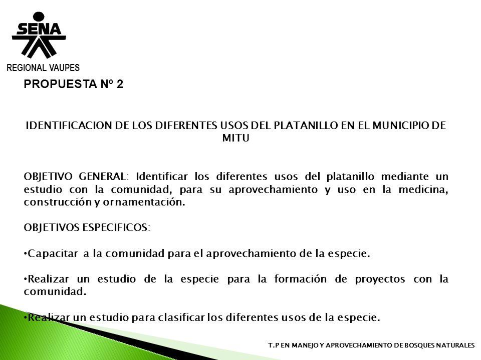 REGIONAL VAUPES T.P EN MANEJO Y APROVECHAMIENTO DE BOSQUES NATURALES PROPUESTA Nº 2 IDENTIFICACION DE LOS DIFERENTES USOS DEL PLATANILLO EN EL MUNICIP