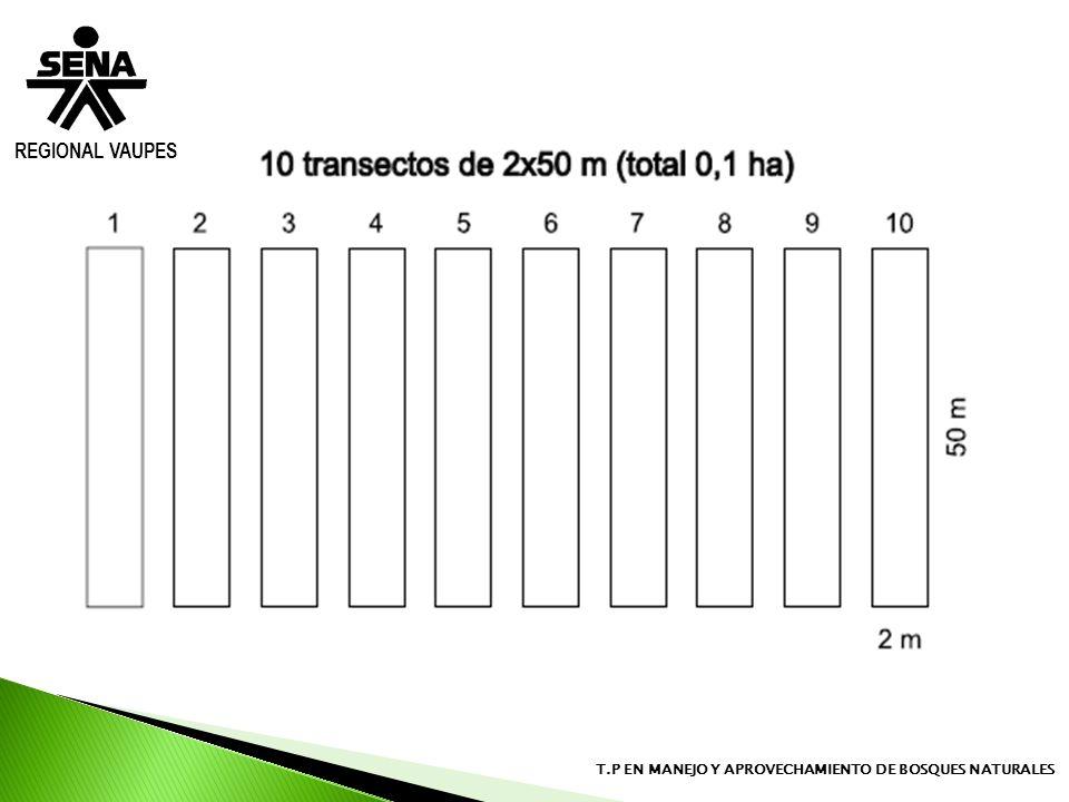 REGIONAL VAUPES T.P EN MANEJO Y APROVECHAMIENTO DE BOSQUES NATURALES