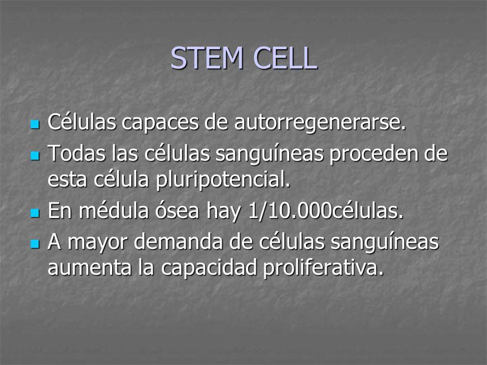 STEM CELL Células capaces de autorregenerarse. Células capaces de autorregenerarse. Todas las células sanguíneas proceden de esta célula pluripotencia