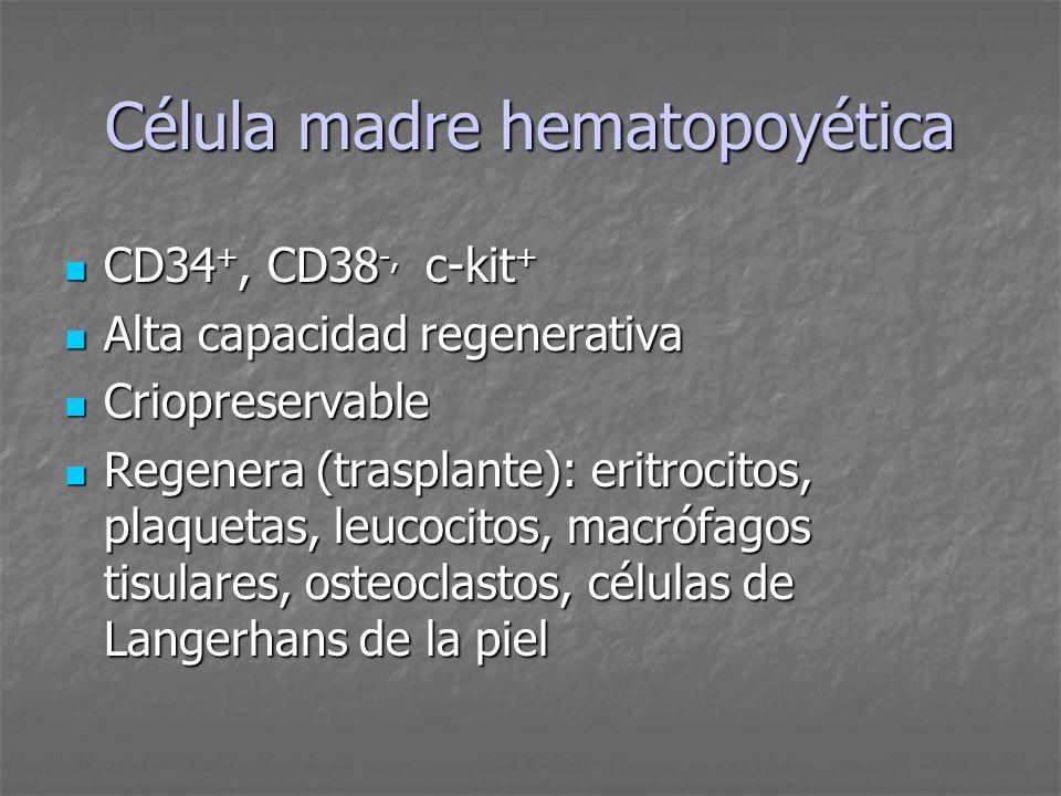 Célula madre hematopoyética CD34 +, CD38 -, c-kit + CD34 +, CD38 -, c-kit + Alta capacidad regenerativa Alta capacidad regenerativa Criopreservable Cr