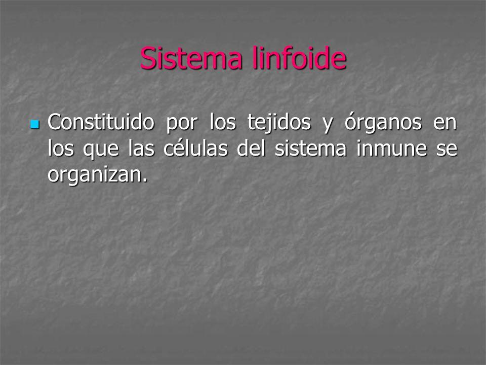 Sistema linfoide Constituido por los tejidos y órganos en los que las células del sistema inmune se organizan. Constituido por los tejidos y órganos e