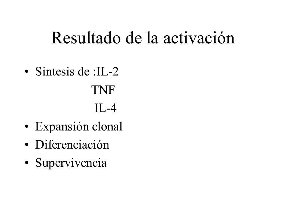 Resultado de la activación Sintesis de :IL-2 TNF IL-4 Expansión clonal Diferenciación Supervivencia