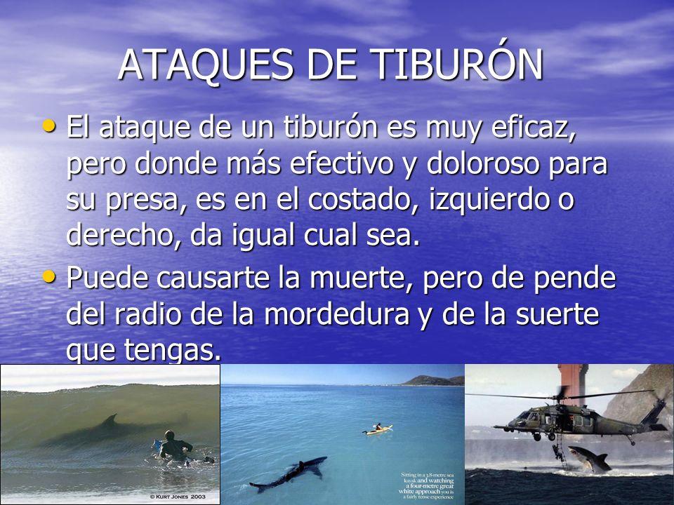 DIENTES DE TIBURÓN DIENTES DE TIBURÓN El diente mas grande es el del MEGALODÓN, pero este tiburón extinguido no se llama a si, se llama carcharodon.