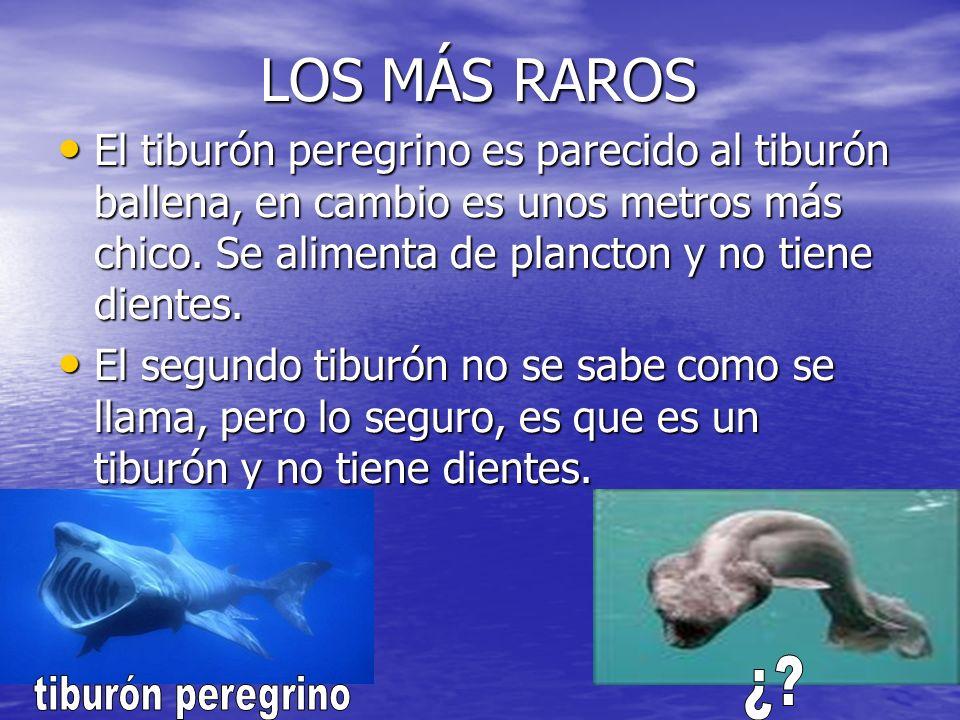 Y LO MÁS IMPORTANTE Y LO MÁS IMPORTANTE Todos los tiburones tienen aletas para poder nadar.
