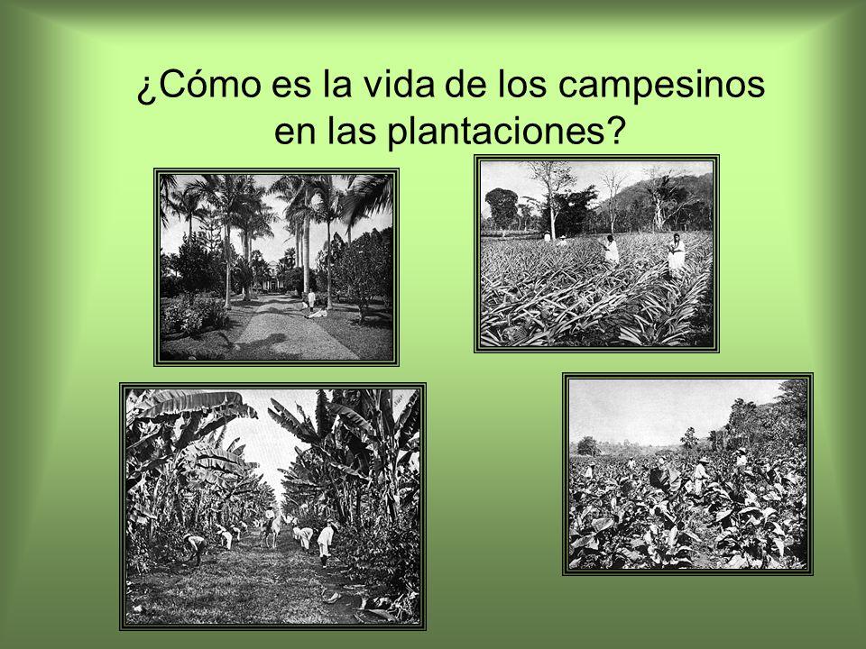 ¿Cómo es la vida de los campesinos en las plantaciones?