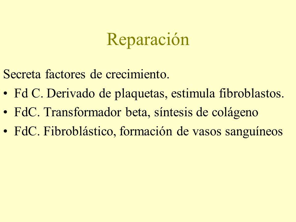 Reparación Secreta factores de crecimiento. Fd C. Derivado de plaquetas, estimula fibroblastos. FdC. Transformador beta, síntesis de colágeno FdC. Fib