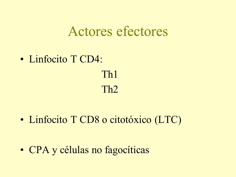 Actores efectores Linfocito T CD4: Th1 Th2 Linfocito T CD8 o citotóxico (LTC) CPA y células no fagocíticas
