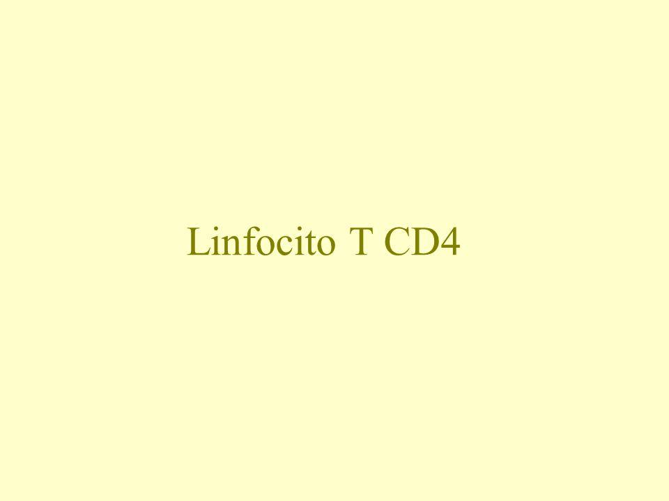 Linfocito T CD4