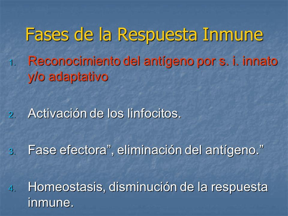 Fases de la Respuesta Inmune 1. Reconocimiento del antígeno por s. i. innato y/o adaptativo 2. Activación de los linfocitos. 3. Fase efectora, elimina