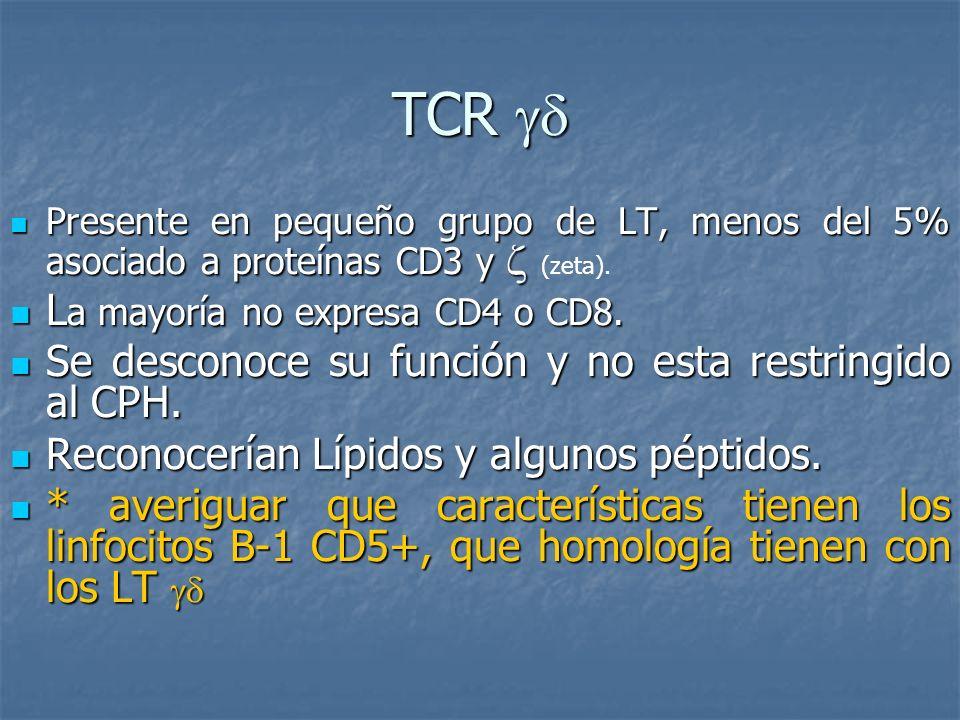 TCR TCR Presente en pequeño grupo de LT, menos del 5% asociado a proteínas CD3 y Presente en pequeño grupo de LT, menos del 5% asociado a proteínas CD