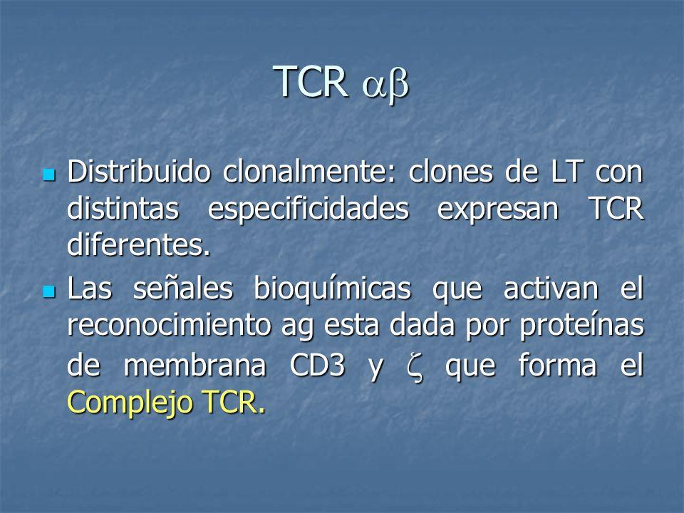 TCR TCR Distribuido clonalmente: clones de LT con distintas especificidades expresan TCR diferentes. Distribuido clonalmente: clones de LT con distint