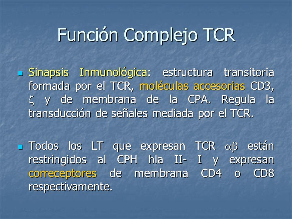 Función Complejo TCR Sinapsis Inmunológica: estructura transitoria formada por el TCR, moléculas accesorias CD3, y de membrana de la CPA. Regula la tr