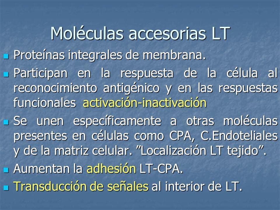 Moléculas accesorias LT Proteínas integrales de membrana. Proteínas integrales de membrana. Participan en la respuesta de la célula al reconocimiento