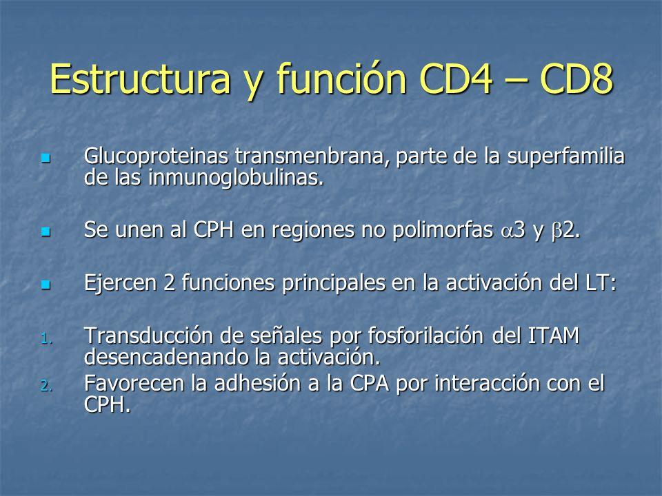 Estructura y función CD4 – CD8 Glucoproteinas transmenbrana, parte de la superfamilia de las inmunoglobulinas. Glucoproteinas transmenbrana, parte de