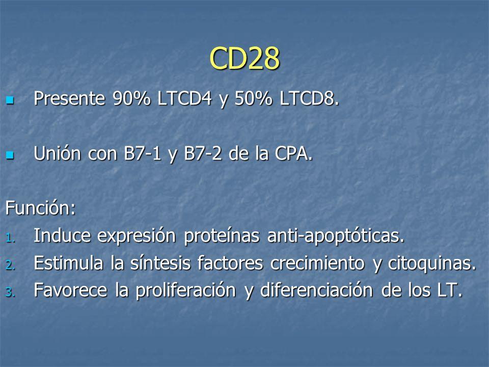 CD28 Presente 90% LTCD4 y 50% LTCD8. Presente 90% LTCD4 y 50% LTCD8. Unión con B7-1 y B7-2 de la CPA. Unión con B7-1 y B7-2 de la CPA.Función: 1. Indu