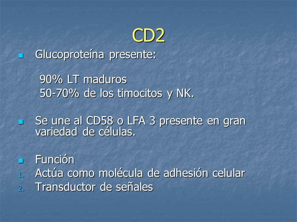 CD2 Glucoproteína presente: Glucoproteína presente: 90% LT maduros 90% LT maduros 50-70% de los timocitos y NK. 50-70% de los timocitos y NK. Se une a