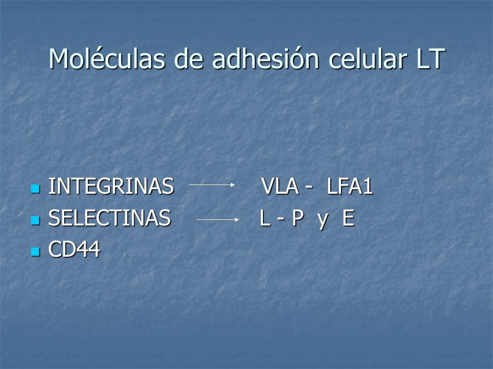 Moléculas de adhesión celular LT INTEGRINAS VLA - LFA1 INTEGRINAS VLA - LFA1 SELECTINAS L - P y E SELECTINAS L - P y E CD44 CD44