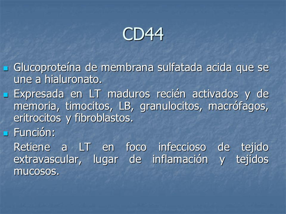 CD44 Glucoproteína de membrana sulfatada acida que se une a hialuronato. Glucoproteína de membrana sulfatada acida que se une a hialuronato. Expresada