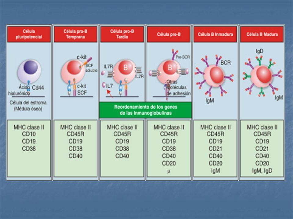 Complejo TCR y Moléculas accesorias