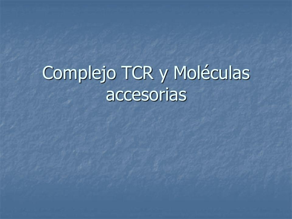 Función Complejo TCR Sinapsis Inmunológica: estructura transitoria formada por el TCR, moléculas accesorias CD3, y de membrana de la CPA.