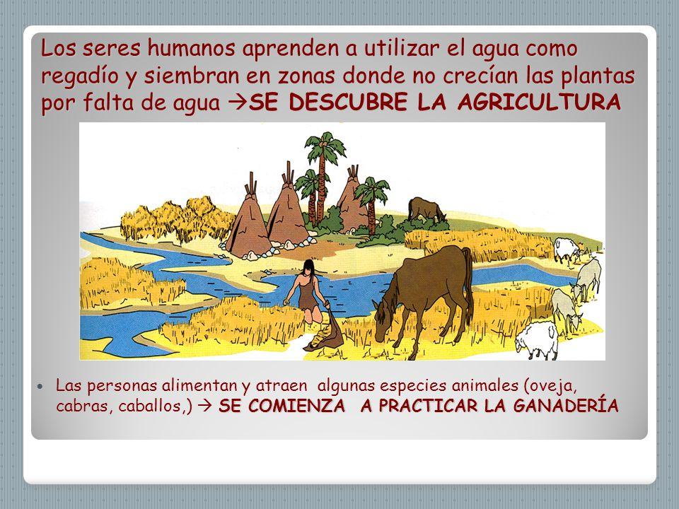 Los seres humanos aprenden a utilizar el agua como regadío y siembran en zonas donde no crecían las plantas por falta de agua SE DESCUBRE LA AGRICULTU