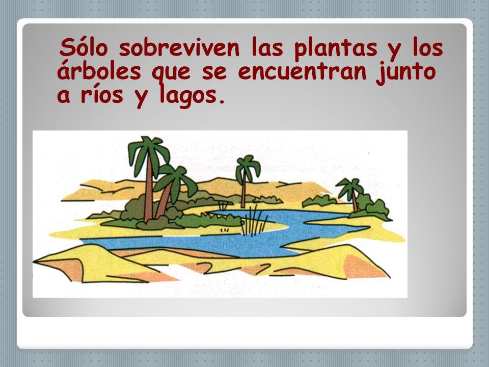 Sólo sobreviven las plantas y los árboles que se encuentran junto a ríos y lagos.