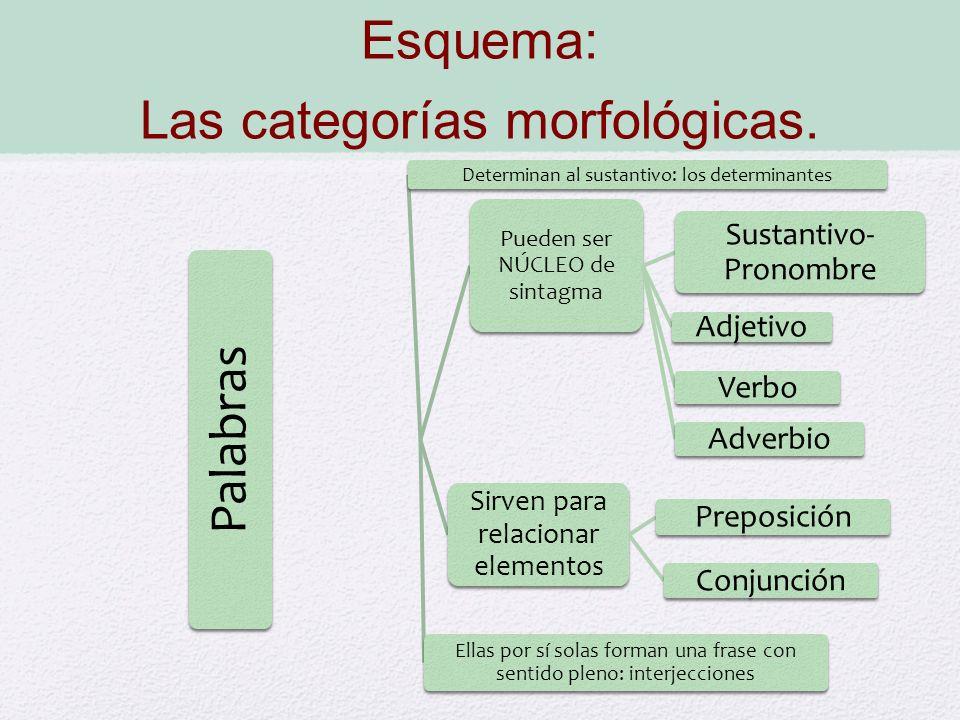 Esquema: Las categorías morfológicas. Palabras Pueden ser NÚCLEO de sintagma Sustantivo- Pronombre Adjetivo Verbo Adverbio Sirven para relacionar elem