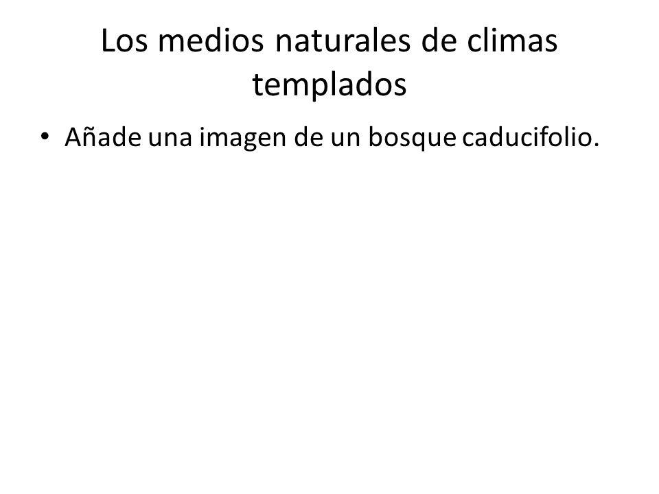 Los medios naturales de climas templados Añade una imagen de un bosque caducifolio.