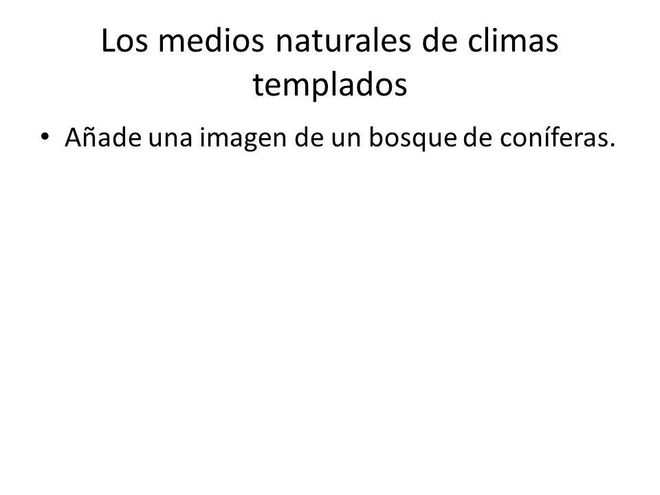 Los medios naturales de climas templados Añade una imagen de un bosque de coníferas.