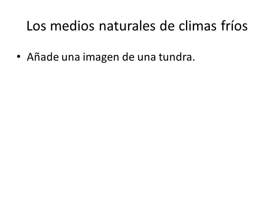Los medios naturales de climas fríos Añade una imagen de una tundra.