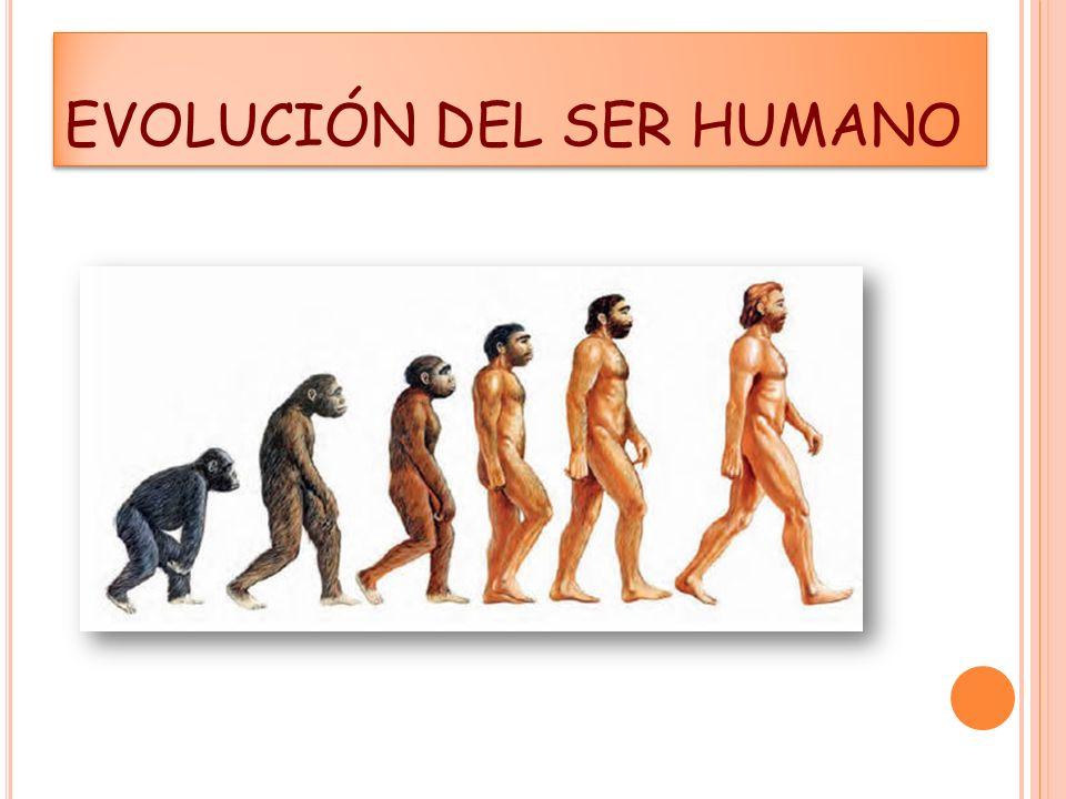 Capacidad craneana semejante a la del homo actual (1.500 c 3 ).