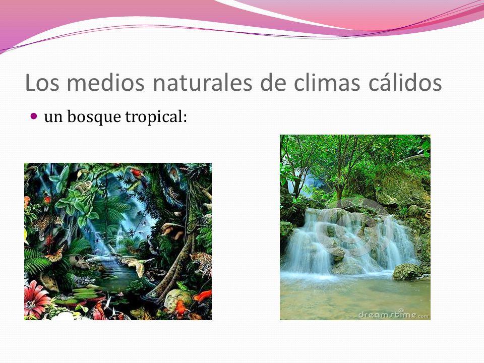 Los medios naturales de climas cálidos un bosque tropical: