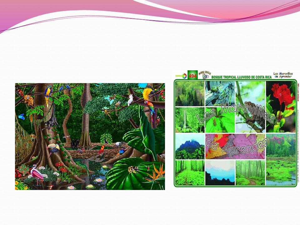 Los medios naturales de climas cálidos una selva: