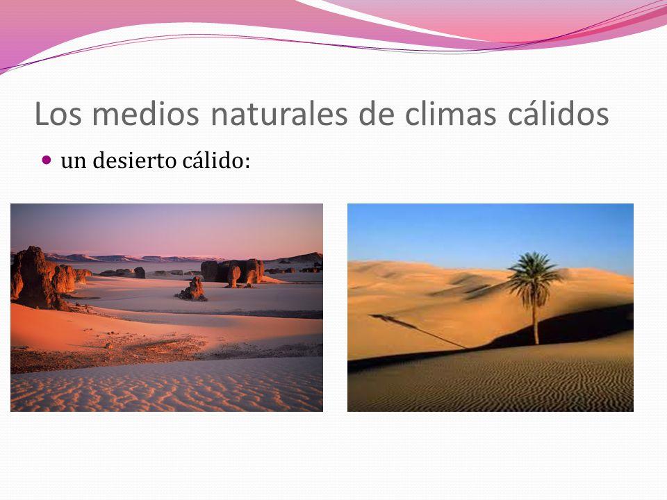 Los medios naturales de climas templados un bosque mediterráneo:
