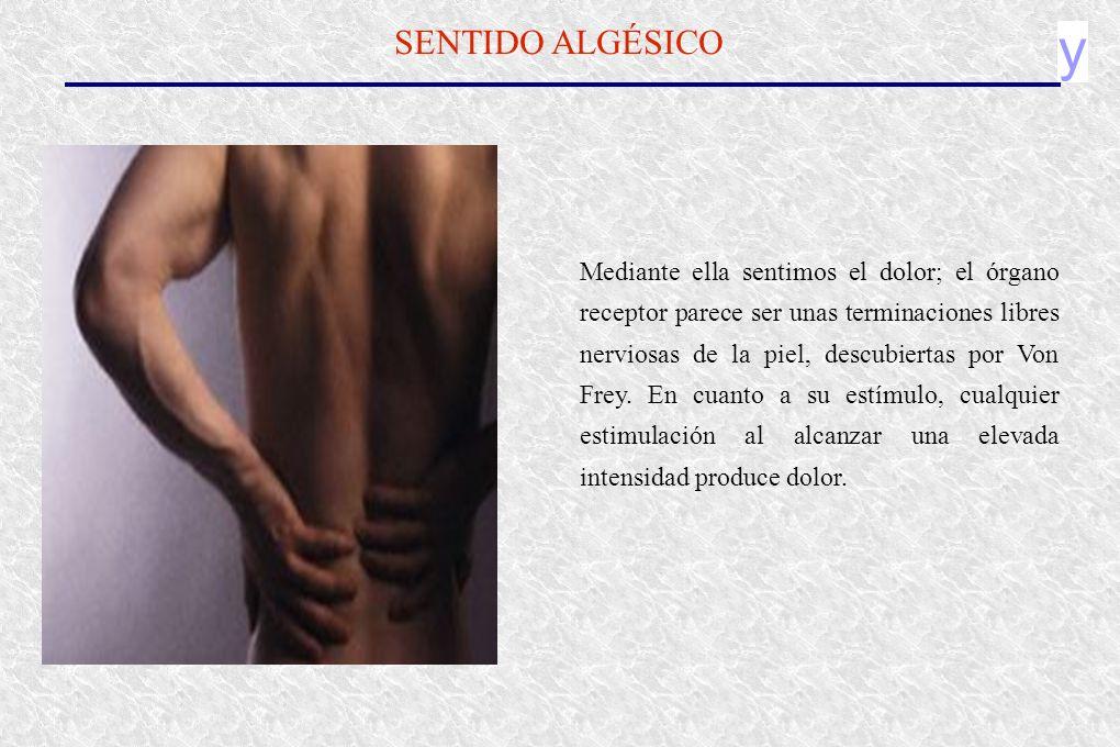 y SENTIDO ALGÉSICO Mediante ella sentimos el dolor; el órgano receptor parece ser unas terminaciones libres nerviosas de la piel, descubiertas por Von