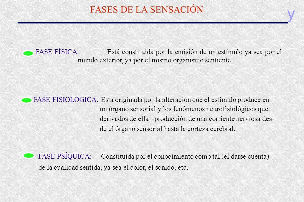 y FASES DE LA SENSACIÓN FASE FÍSICA.