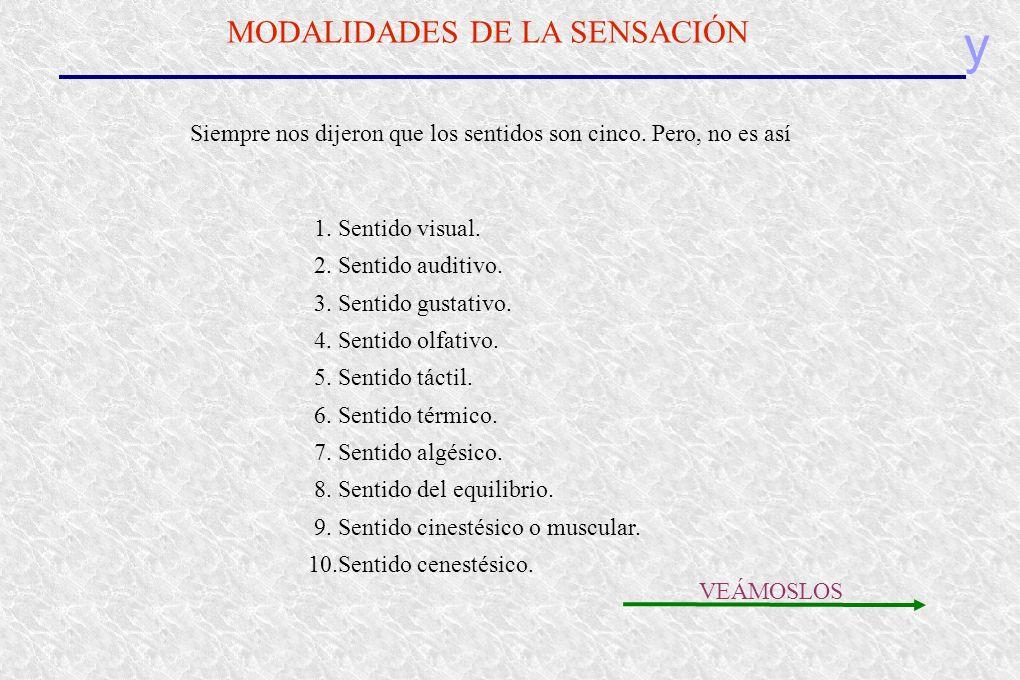 y MODALIDADES DE LA SENSACIÓN Siempre nos dijeron que los sentidos son cinco. Pero, no es así 1. Sentido visual. 2. Sentido auditivo. 3. Sentido gusta