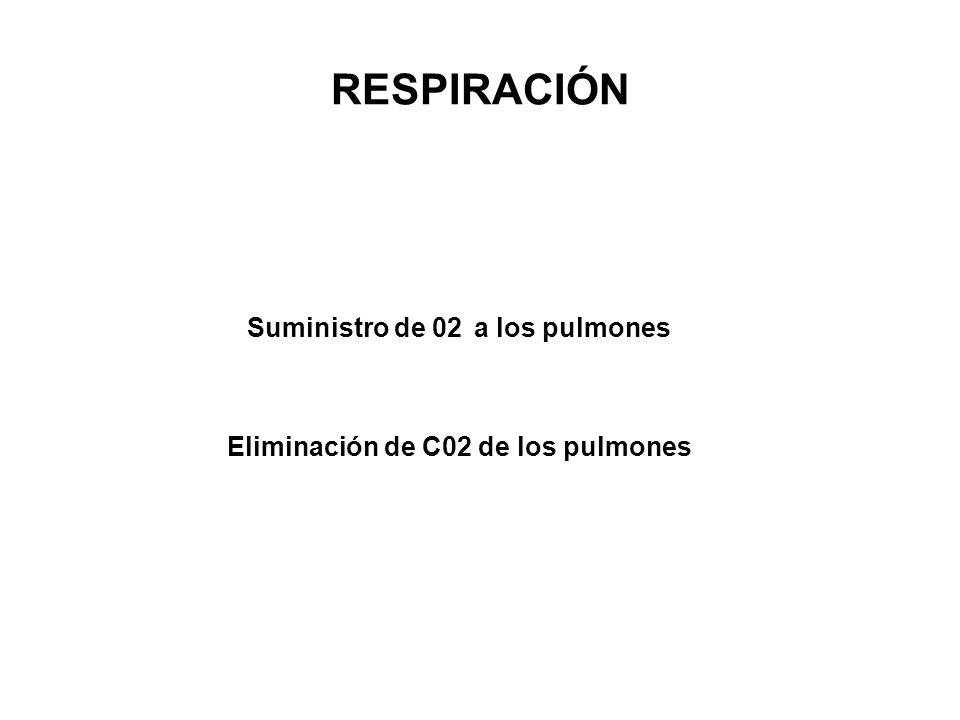 Suministro de 02 a los pulmones Eliminación de C02 de los pulmones