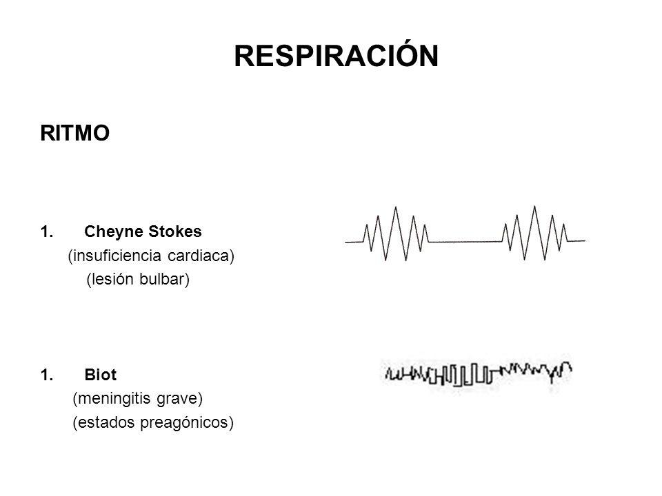 RITMO 1.Cheyne Stokes (insuficiencia cardiaca) (lesión bulbar) 1.Biot (meningitis grave) (estados preagónicos) RESPIRACIÓN