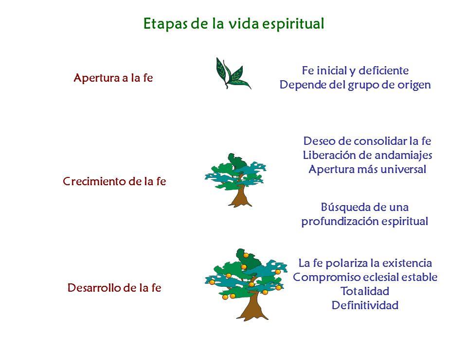 Etapas de la vida espiritual Apertura a la fe Crecimiento de la fe Desarrollo de la fe Fe inicial y deficiente Depende del grupo de origen Deseo de co