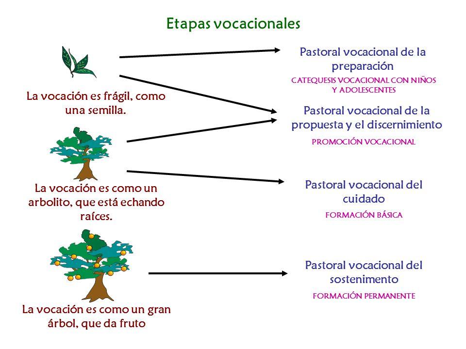 Etapas vocacionales La vocación es frágil, como una semilla. La vocación es como un arbolito, que está echando raíces. La vocación es como un gran árb