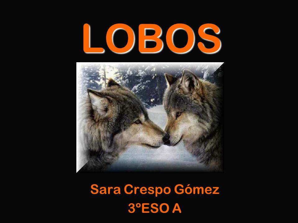 LOBOS Sara Crespo Gómez 3ºESO A