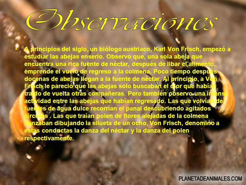 A principios del siglo, un biólogo austriaco, Karl Von Frisch, empezó a estudiar las abejas enserio. Observo que, una sola abeja que encuentra una ric