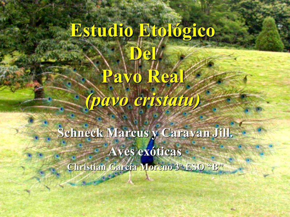Estudio Etológico Del Pavo Real (pavo cristatu) Schneck Marcus y Caravan Jill. Aves exóticas Christian García Moreno 3º ESO B
