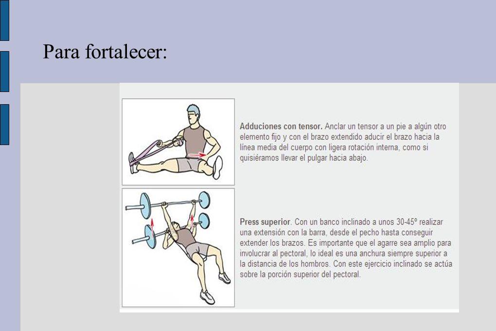 DORSAL ANCHO Músculo de mayor volumen y fuerza de la espalda.