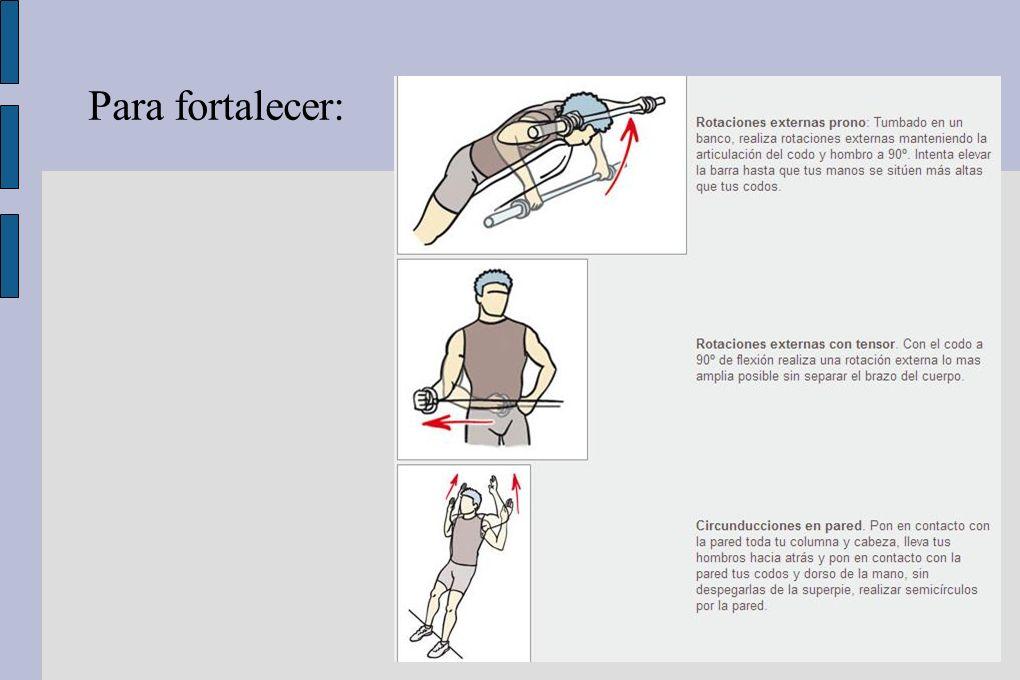 DELTOIDES Músculo que actúa en sinergia con M.Cintura Escapular.