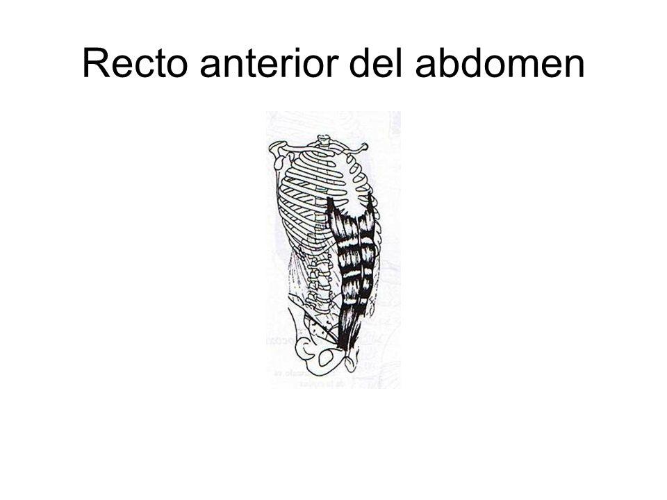 Recto anterior del abdomen