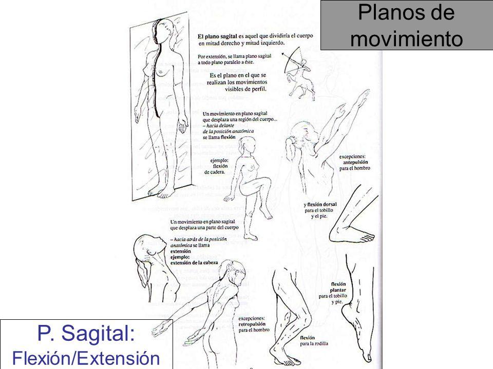 Planos de movimiento P. Sagital: Flexión/Extensión