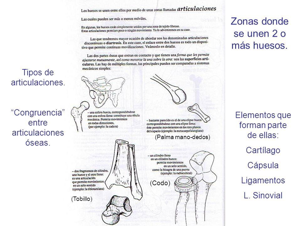 (Palma mano-dedos) (Tobillo) (Codo) Tipos de articulaciones. Congruencia entre articulaciones óseas. Zonas donde se unen 2 o más huesos. Elementos que