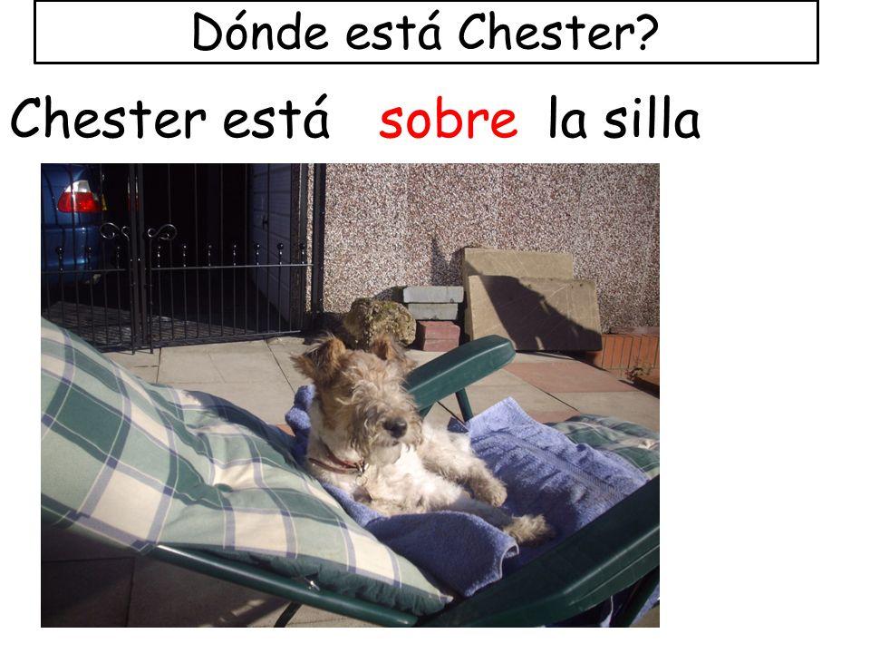 Dónde está Chester? Chester estásobrela silla